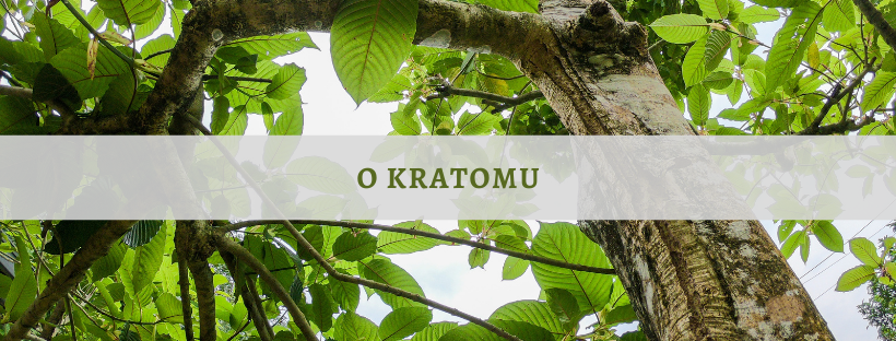 co je to kratom